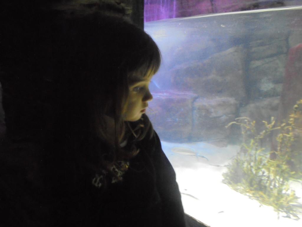 Aquário de Londres - Sea Life