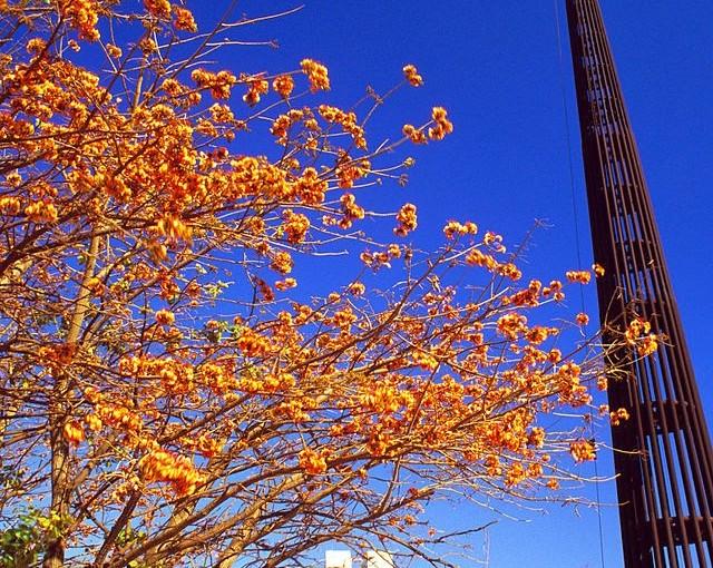 Dez motivos para visitar Brasília
