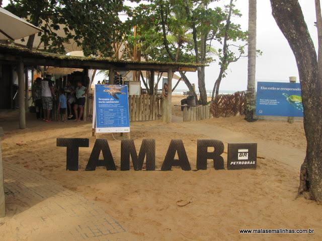 Praia do Forte – Visitando o Projeto Tamar