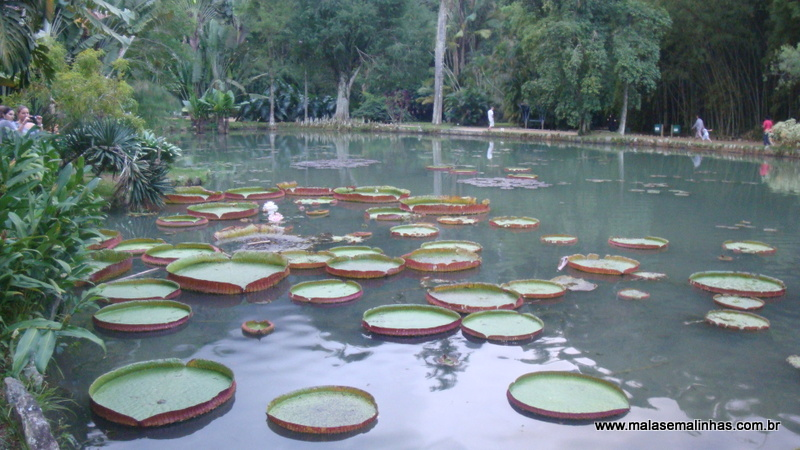 Jardim Botânico 10