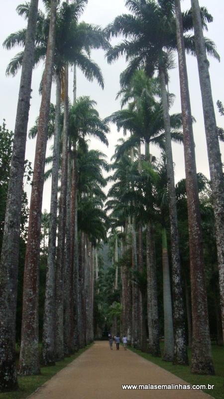 Jardim Botânico 7
