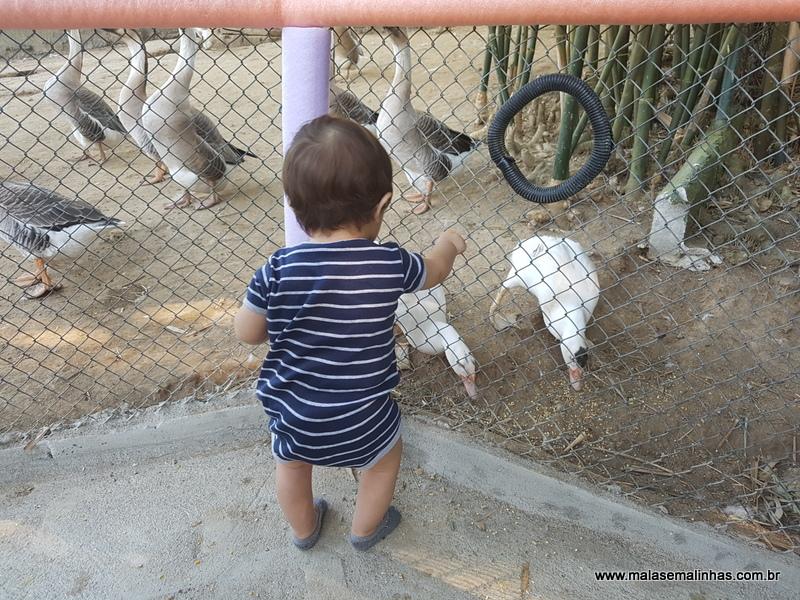 Lucas amou os patos!!!