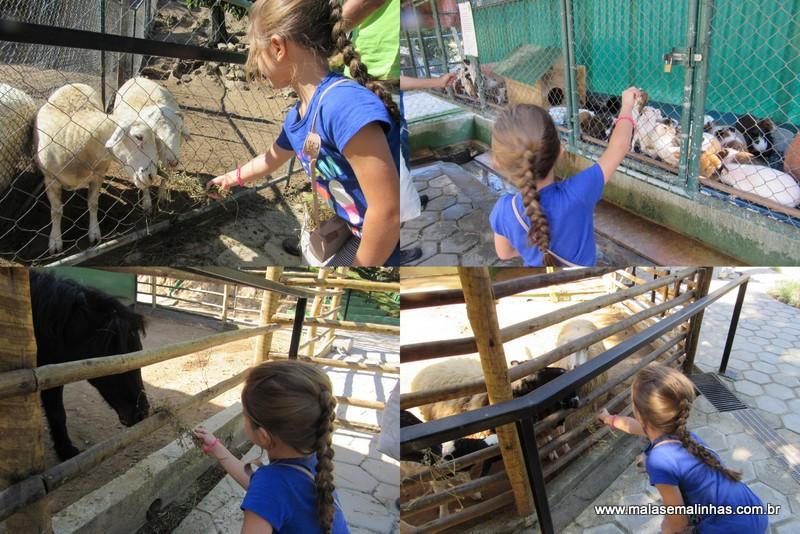 Beatriz alimentando os animais
