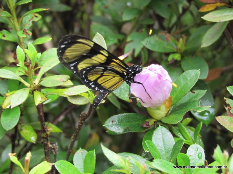 Borboletário Flores que Voam (59)