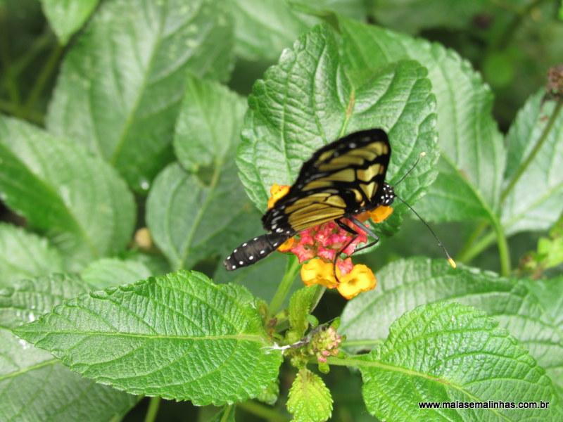 Borboletário Flores que Voam (70)
